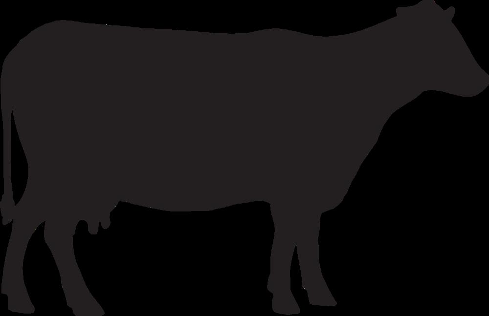 De Loeiende Koe